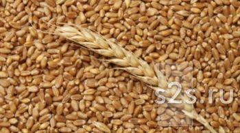 Пшеница продаем франко-вагон FCA