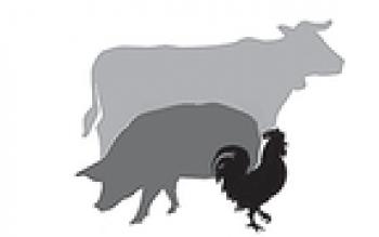 Оптовые поставки мяса и мясного сырья